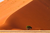 Red dunes with tree at Sossusvlei, Namibia