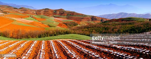 Red field with mountain in background