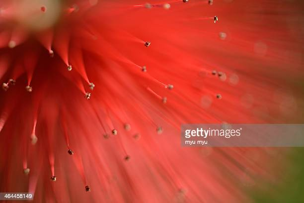 Red flower puff
