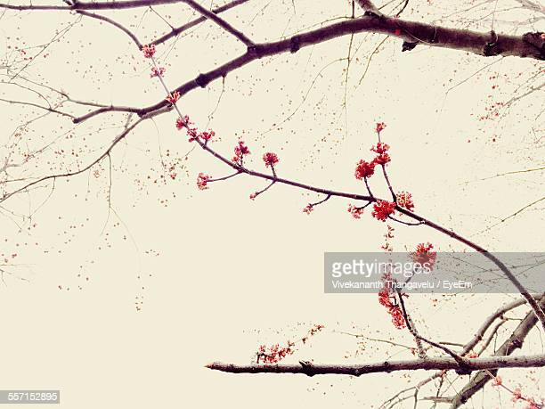 Red Flowers In Tree