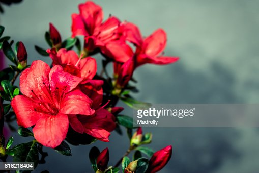 Red flowers : Bildbanksbilder