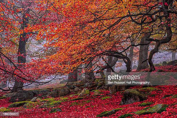 Red Forest Tree Landscape Autumn Colours Leaf