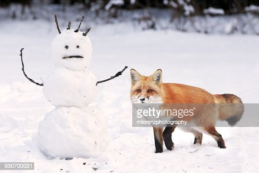 Red Fox & The Scared Snowman