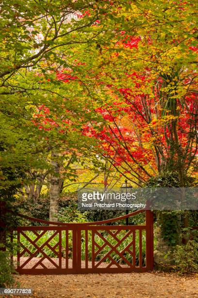Red gate in autumn colors