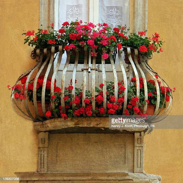 Red Geramiums