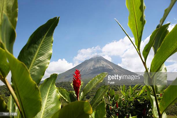 Red Ginger Near Volcan Arenal