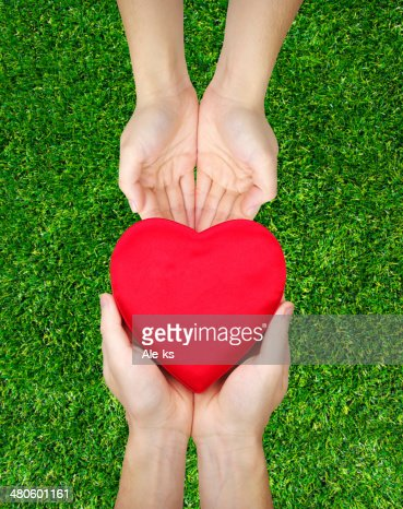 Red heart in hands : Stock Photo
