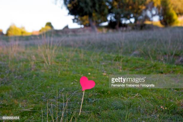 Red heart of love in the field on valentine's day