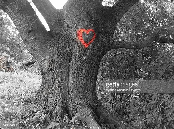 Red Heart Shape On Tree Trunk At Forest