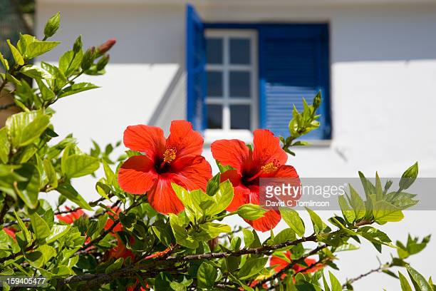 Red hibiscus and blue shutters, Vathy, Ithaca