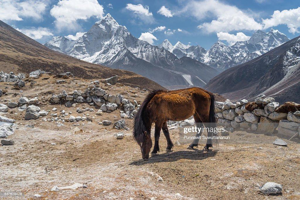 Red horse at Thukla village, Everest region