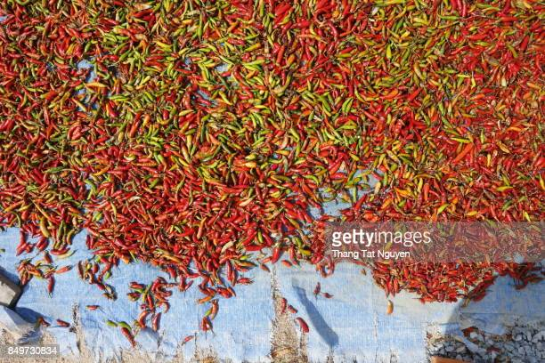 Red hot chili drying in sunlight