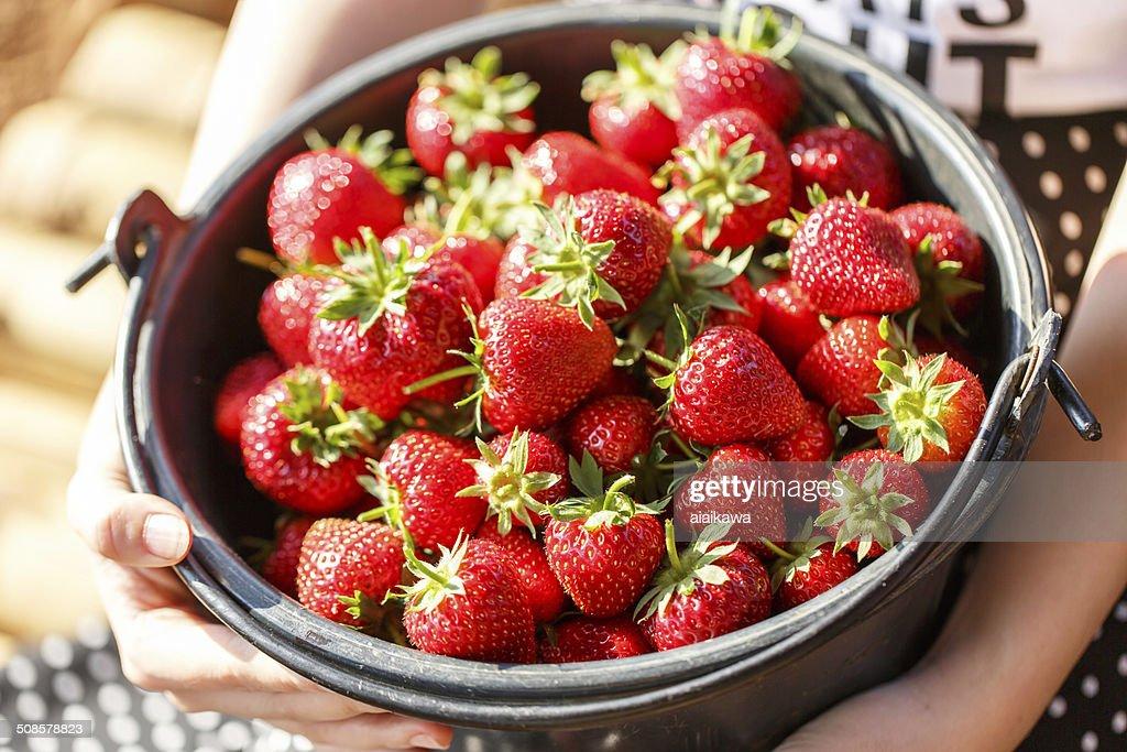 Rote frische saftige Erdbeeren in Korb, Nahaufnahme : Stock-Foto