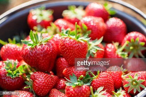 Red juicy fresh strawberries closeup in basket : Stockfoto