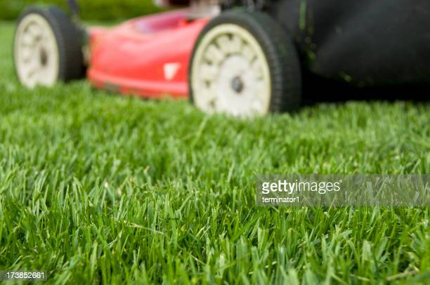 A red lawn mower cutting green grass