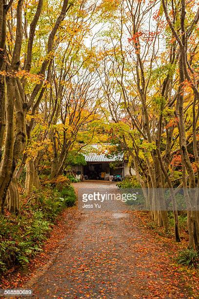 Red leaves in forest at Japan.