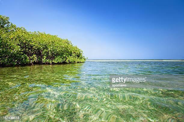 Rouge mangrove et les eaux peu profondes dans une île tropicale