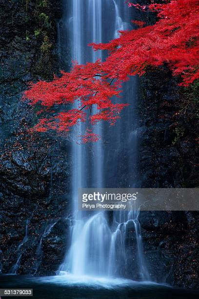 Red maple at Minoo Waterfall