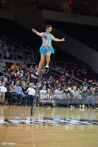 Red Panda performs for the halftime crowd at a game against the Windy City Bulls at The Erie Insurance Arena on November 12 2016 in Erie Pennsylvania...