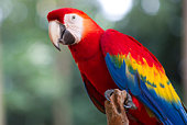 a red macaw standing on the tree trunk