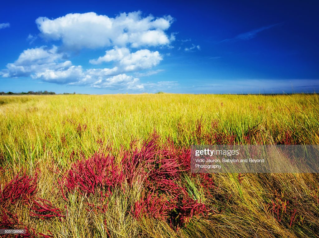 Red Pickleweed in the Grass Against Bright Blue Sky at Gardiner County Park