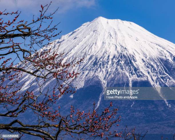 Red plum blossoms and Fuji