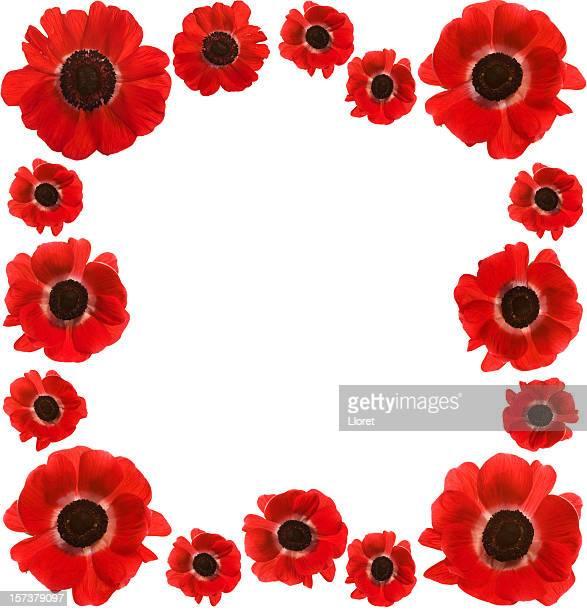 Red Poppies Rahmen mit Textfreiraum (XXL