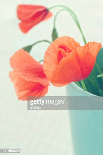 Red poppies in a blue vase : Stock Photo