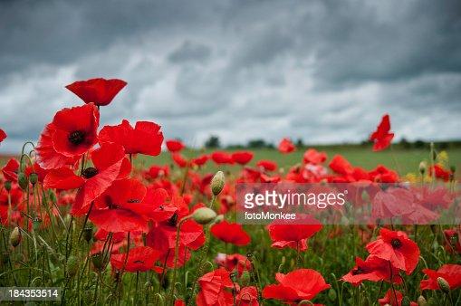 Papaveráceas vermelho, Nuvens escuras, Reino Unido