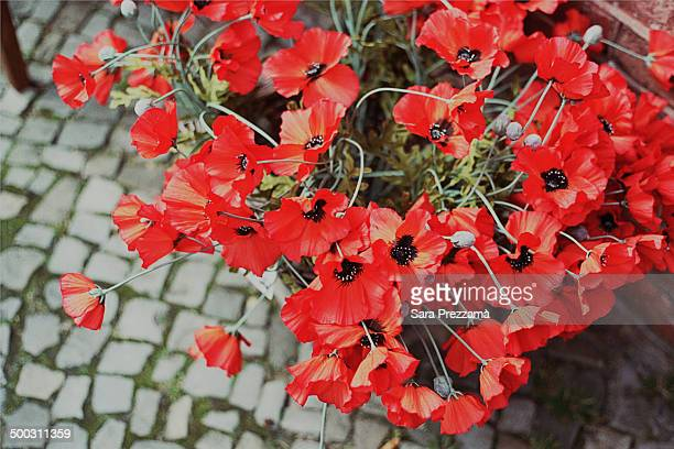 Red poppies in a vase on a cobble street