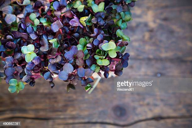 Red radish cress on wooden table, elevated view