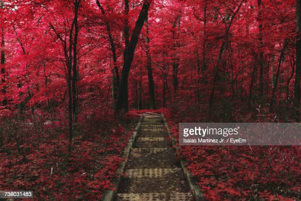 Red Road Amidst Trees