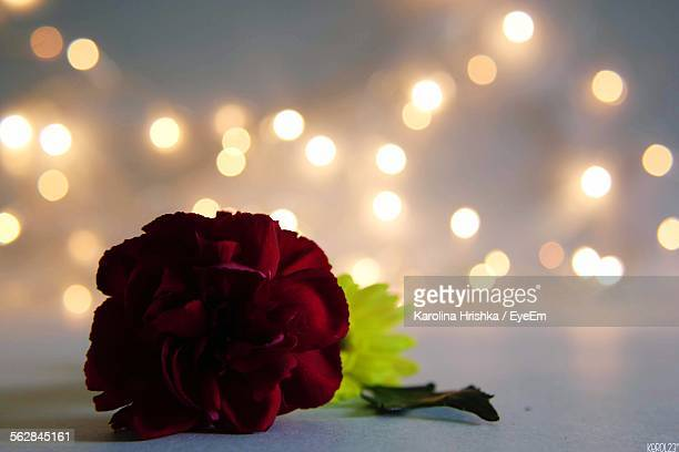 Red Rose Against Illuminated Wall