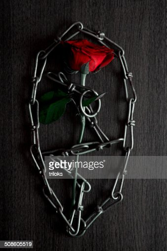 Red rose and chain : Stock Photo