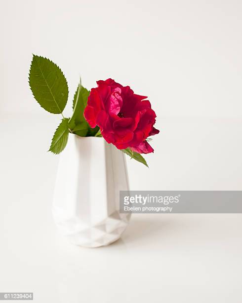 Red rose on a white polygon vase