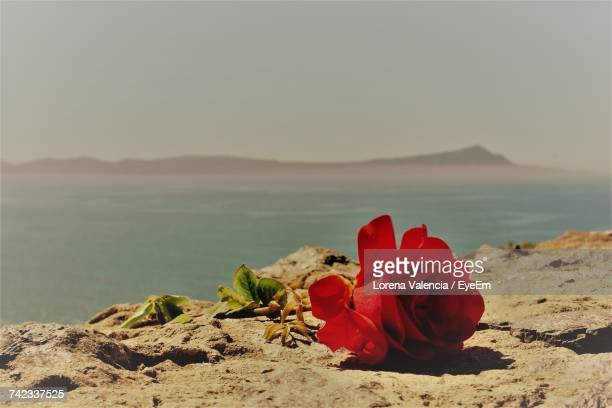 Red Rose On Beach Against Sky