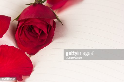 Red rose on notebook dbackground : Stock Photo