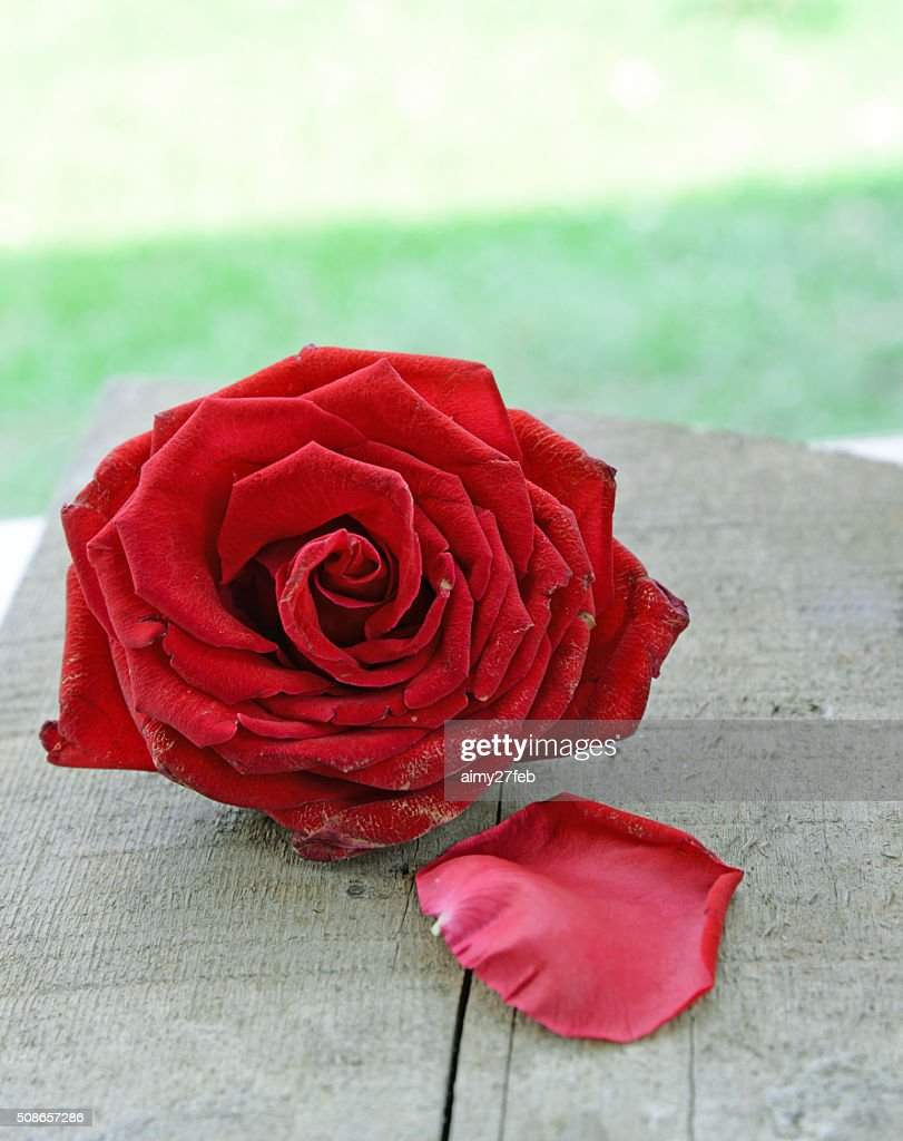 Red rose on wooden table : Stock Photo