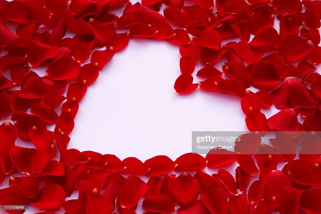 High Angle View Of A Red Rose And Petals In Heart Shape On White ...