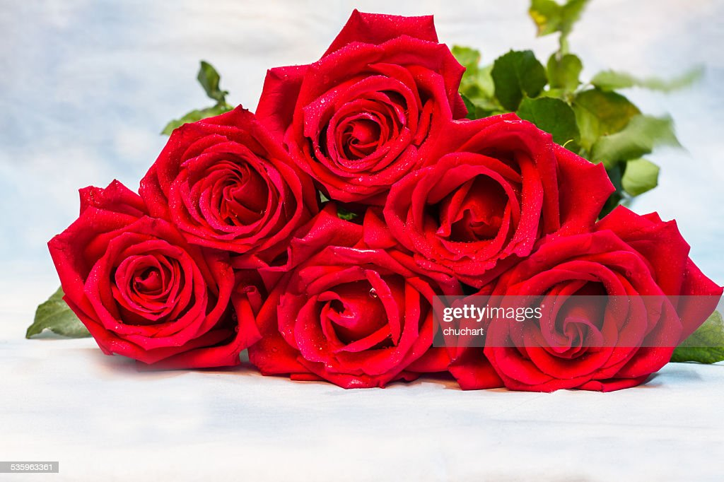 red rose with water drops on background : Stock Photo