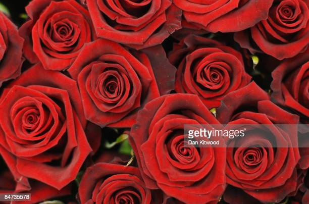 Red roses are displayed on a flower stall in New Covent Garden Flower Market on February 11 2009 in London England New Covent Garden Flower Market is...