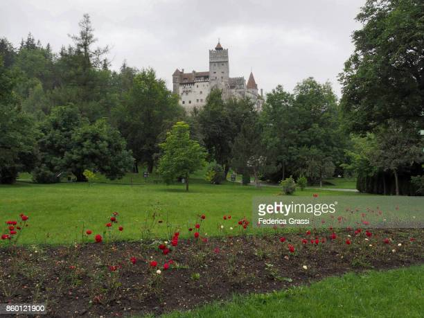 Red Roses At Bran Castle, Transylvania, Romania