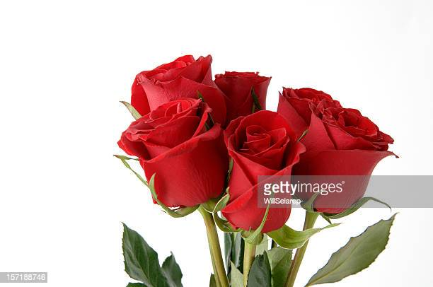 Red roses bouquet in white background
