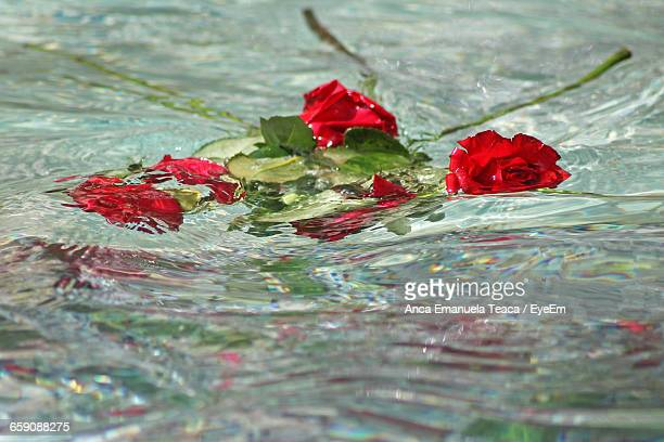 Red Roses Floating On Pond