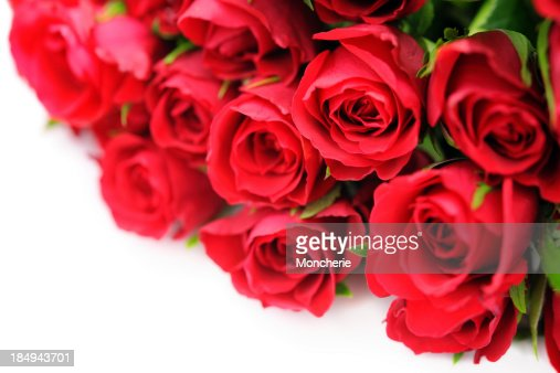 Red Roses on white with copy space