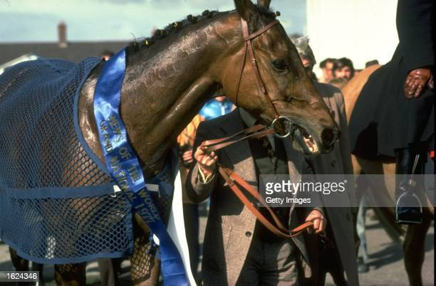 Red Rum is led to the winners enclosure after winning the Grand National at Aintree racecourse in Liverpool England Mandatory Credit Allsport UK...