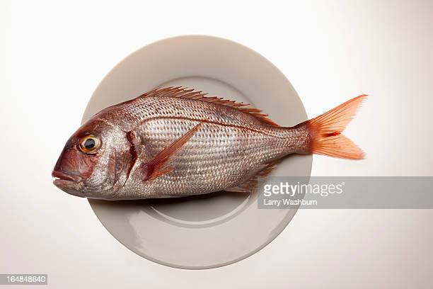 Red Sea Bream, on a plate