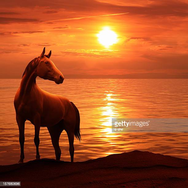 Red sea sunset landscape with horse siluette