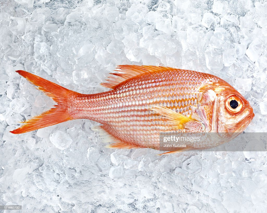 Red snapper on ice : Stock Photo