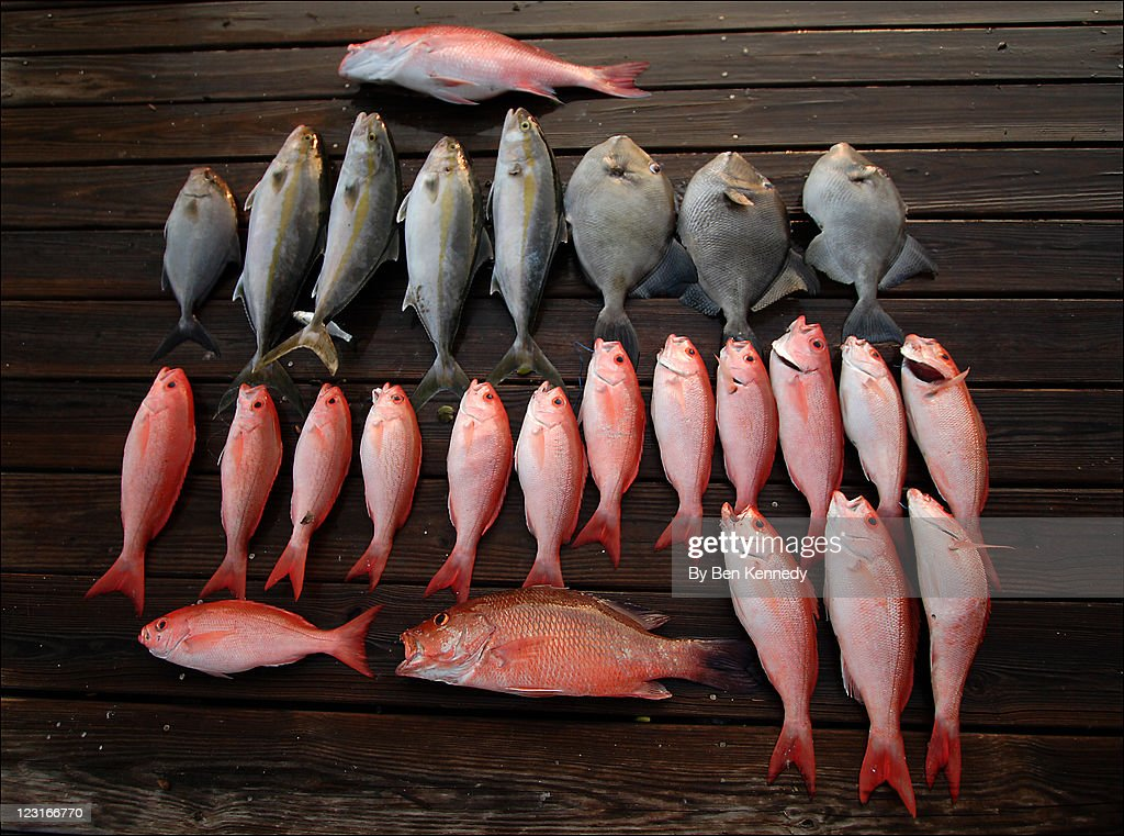 Red snapper : Stock Photo